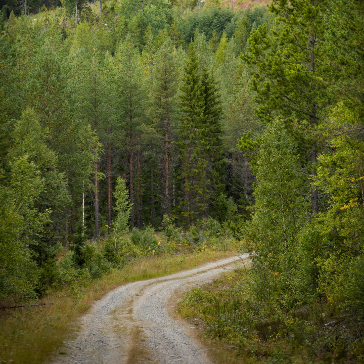 Skogsvy med skogsbilväg, forest with a forest road