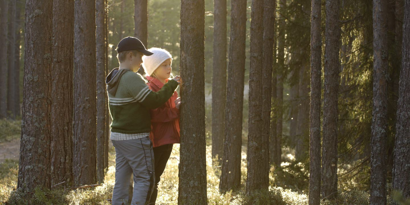 Pojke och flicka vid trädstam i skogen. Boy and girl standing by tree in the forest